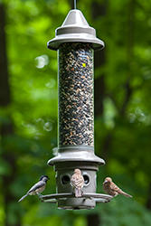 Wild Birds Unlimited Eliminator Bird Feeder