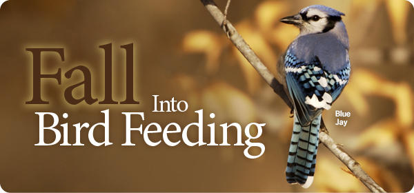 Fall Into Bird Feeding