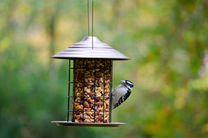 Decorative Seed Cylinder Feeder